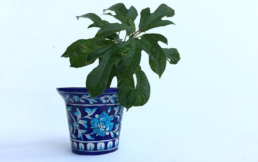 Dark Blue Planter- Medium - Planters - indic inspirations