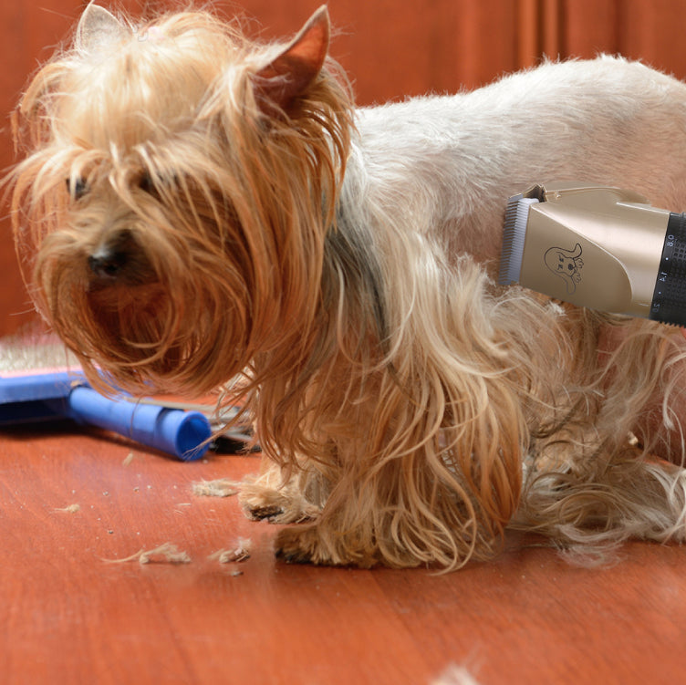Petcare - Groomsy's™ Best Rechargeable Dog And Cat Pet Hair Clippers, Trimmer, And Grooming Kit