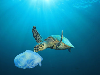How do we prevent plastic waste from doubling in 20 years?