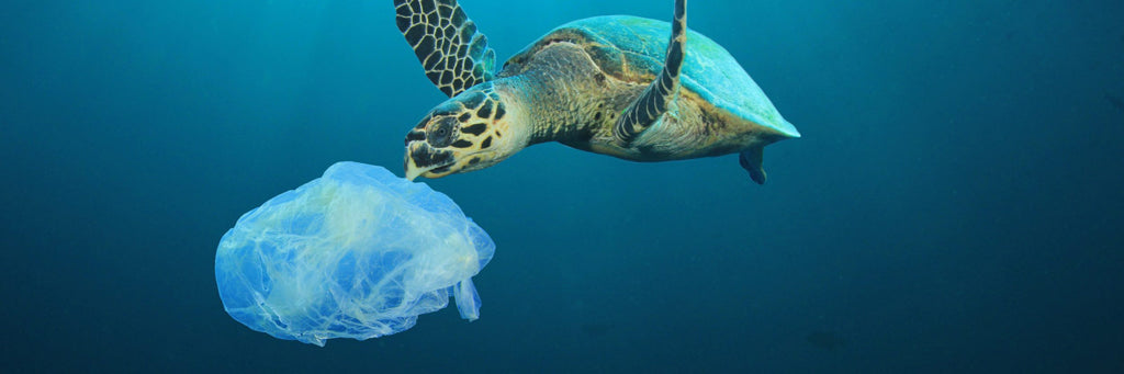 Turtle with plastic bag in ocean