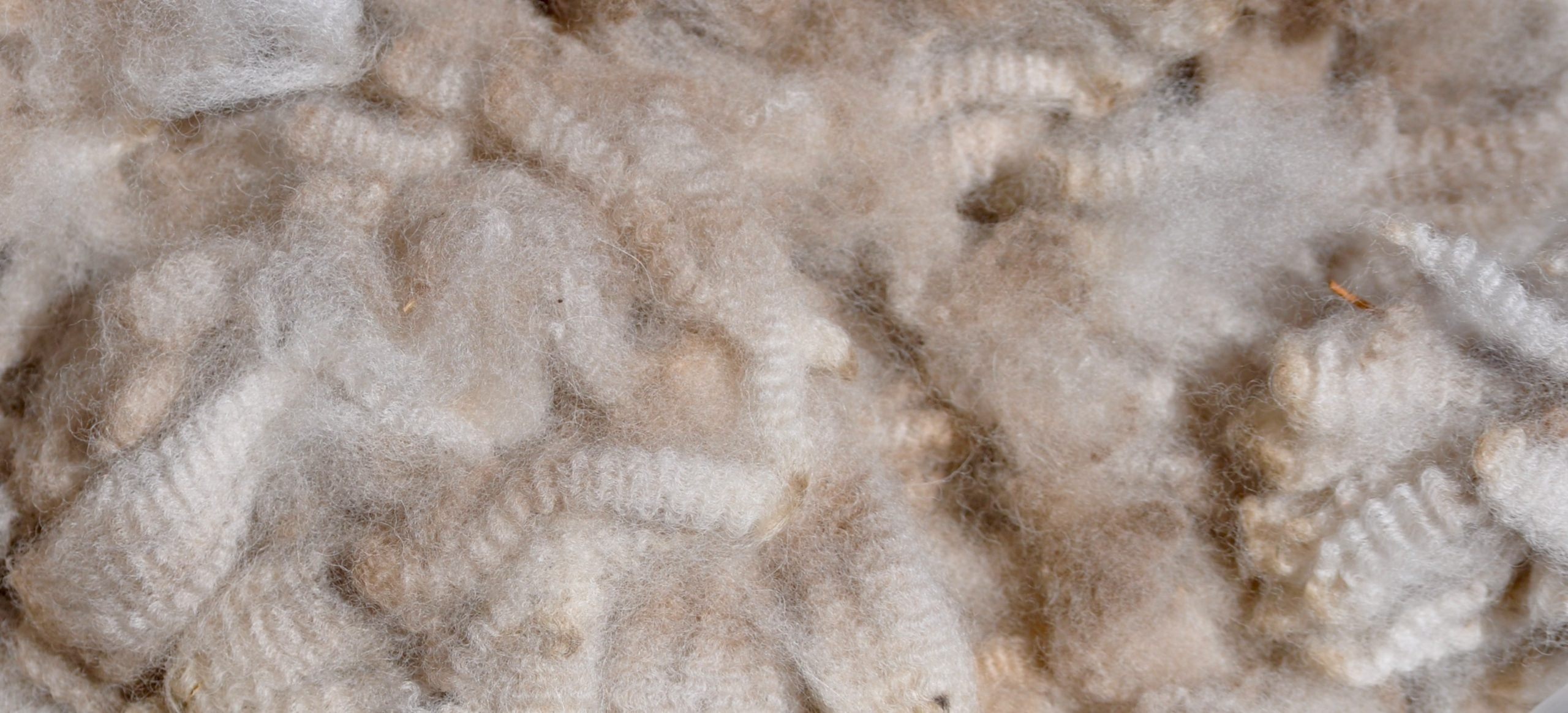 Alpaca wool is not itchy!