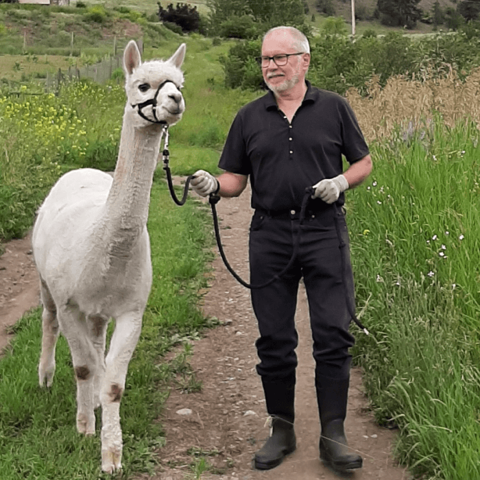 Life on our alpaca ranch