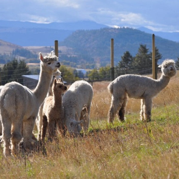 About The Alpaca Ranch