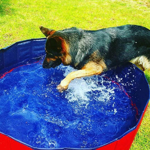 Portable Paw Pool