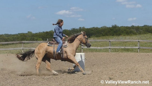 "A Rose For Guy AKA ""Scooby"" ~15.1HH, 2011, Palomino AQHA Gelding"