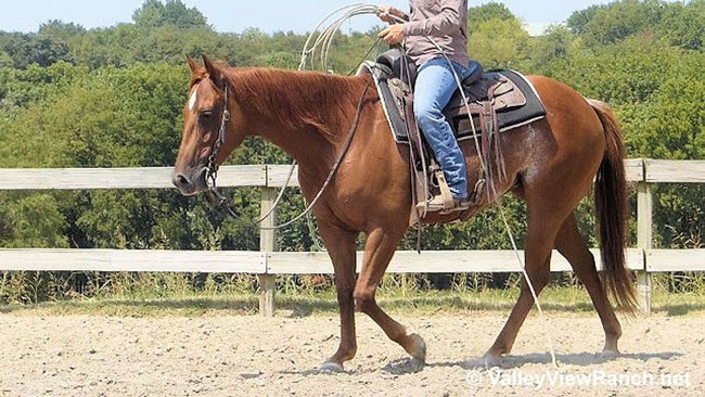 Smart Barn Cat-14.2H, 2015, Sorrel AQHA Mare