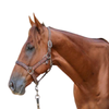 Check Out This Athletic Gelding! Wow! English/Western/Trails!