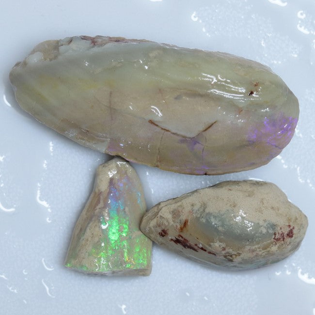122.05 cts Opal Rough Parcel, Fossilised Shell 20.7-50.2x5.4-22.2x8.2-13.6mm