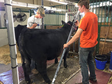 Load image into Gallery viewer, Show Brite LED lighting with 4-H steer