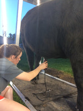 Load image into Gallery viewer, grooming show steer with LED lighting is easy