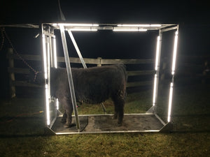 show steer with LED lighting
