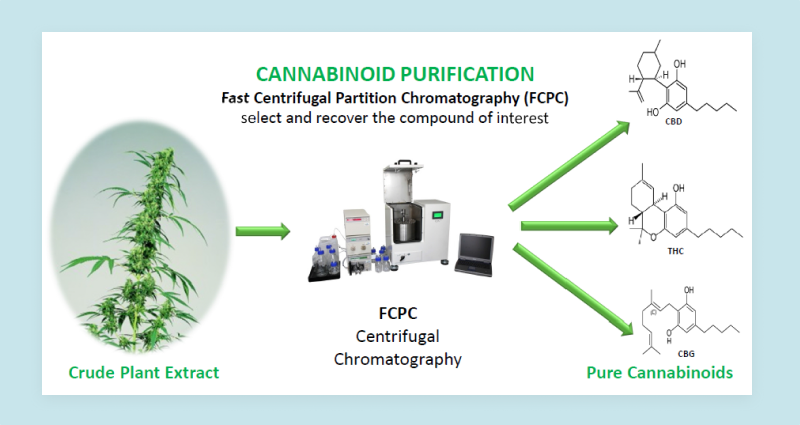 How is CBG Extracted?