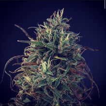 Load image into Gallery viewer, Cannatonic #4 - Hemp Flower 1/8oz
