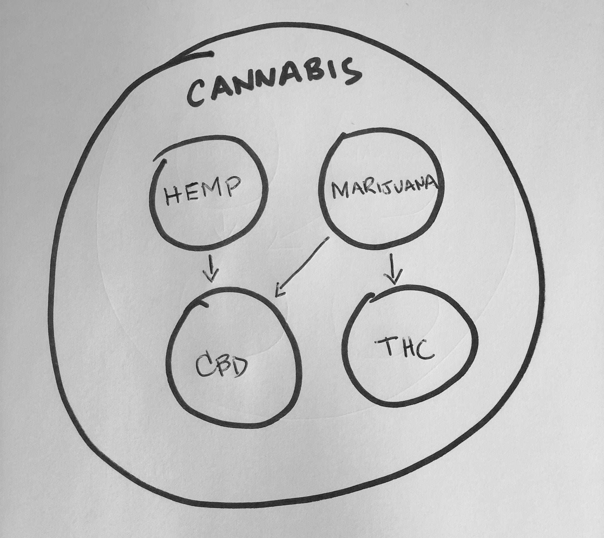 The relationship between cannabis, hemp, and marijuana.