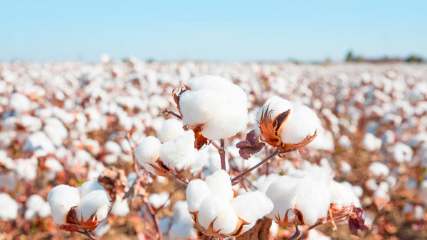 Organic Cotton: Why It's Better for Us & The Planet