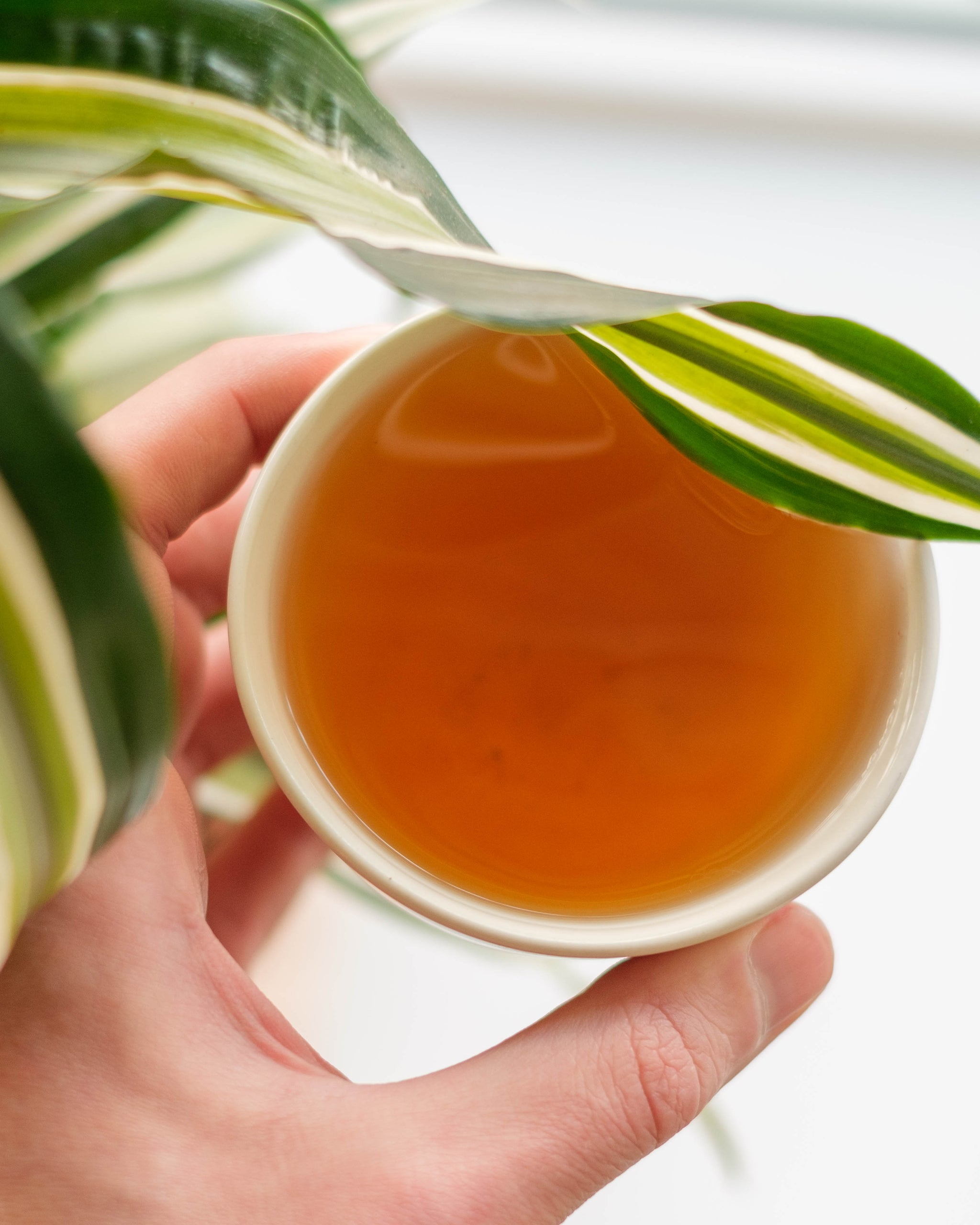 Stay healthy with Japanese Green Tea