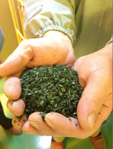Mizuba Tencha tea leaves from Uji, Japan