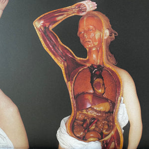 The Anatomical Venus