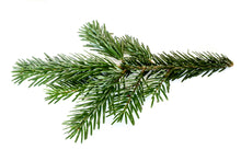 Load image into Gallery viewer, Balsam Fir