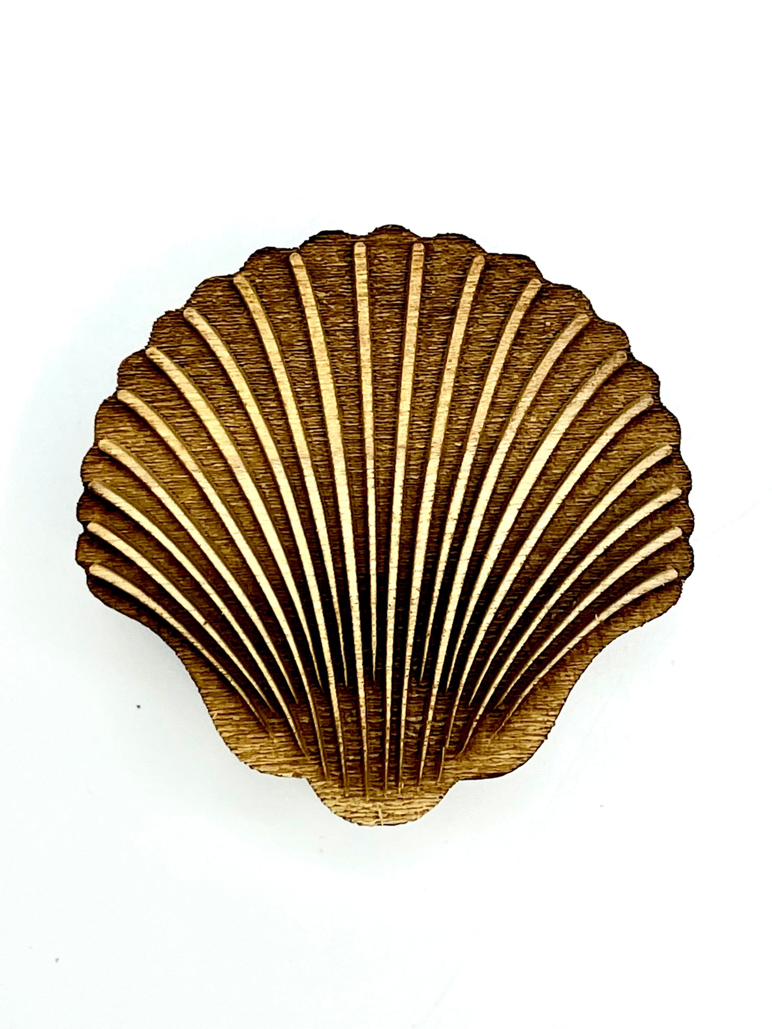 Clam Shell - Large
