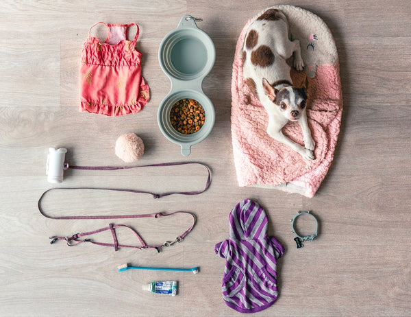 Clean your pet's accessoriesto keep germs out