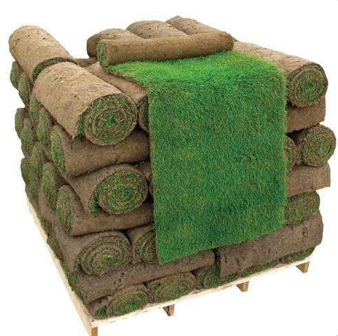 turf regal weed free for lawns