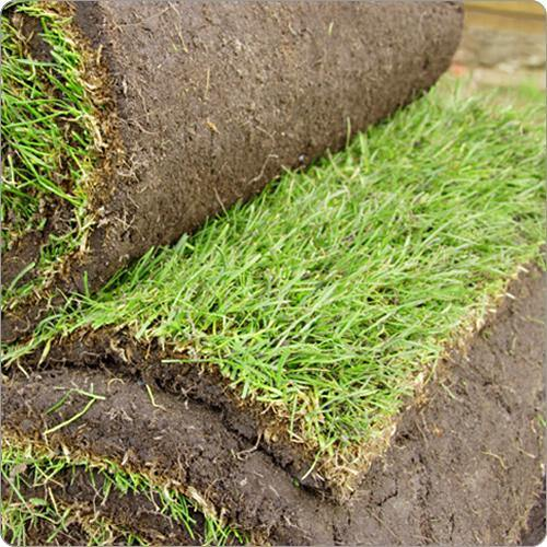 turf lawn grass close in rolls