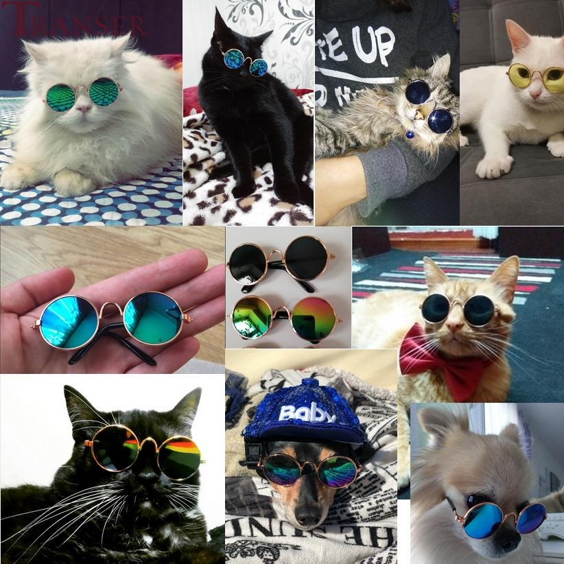 Pet Sunglasses