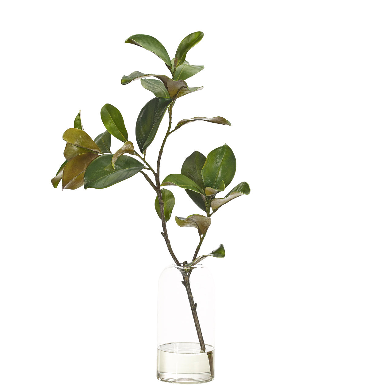 Magnolia Branch in Clear Vase