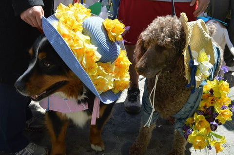 Daffodil Dog Parade