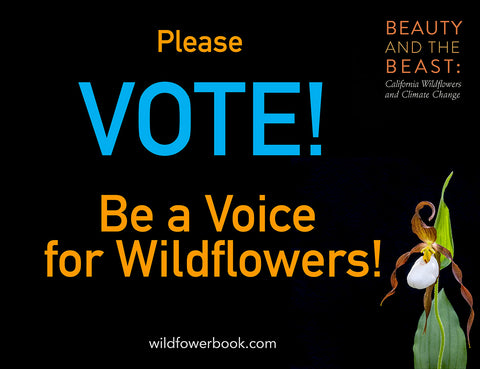 Please Vote Be a Voice for Wildflowers with beautiful white and brown mountain lady slipper wildflower