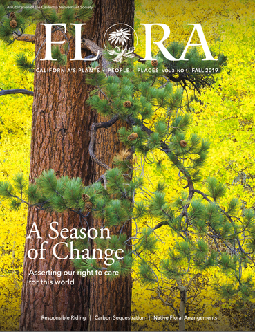 Cover of CNPS Flora Magazine: Ponderosa Pines and yellow aspens by Nita Winter