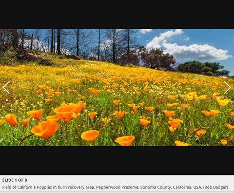 Press Democrat article on Beauty and the Beast: California wildflowers and Climate Change