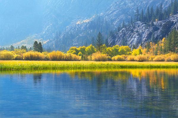 CNPS Flora Magazine: Fall foliage at June Lake by Rob Badger