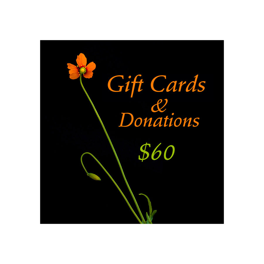 Long stemmed bright orange wind poppy wildflower against a black background with the words Gift cards and donations. $60