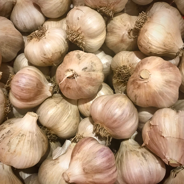 Garlic - Culinary (USDA Organic)