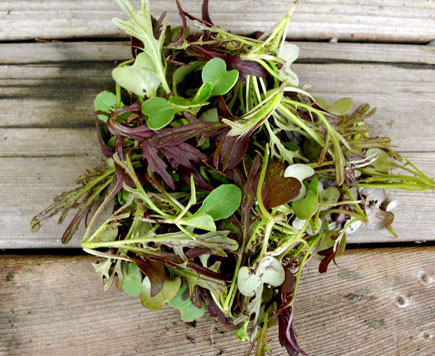 Microgreens - 5oz Bag