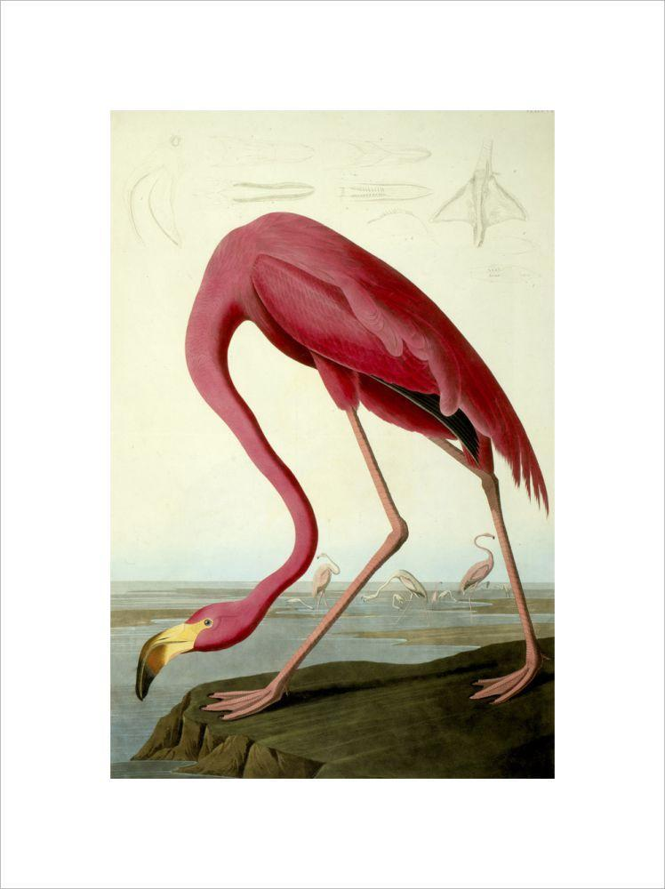 American Flamingo Smith & Co Galleries - Strivezy