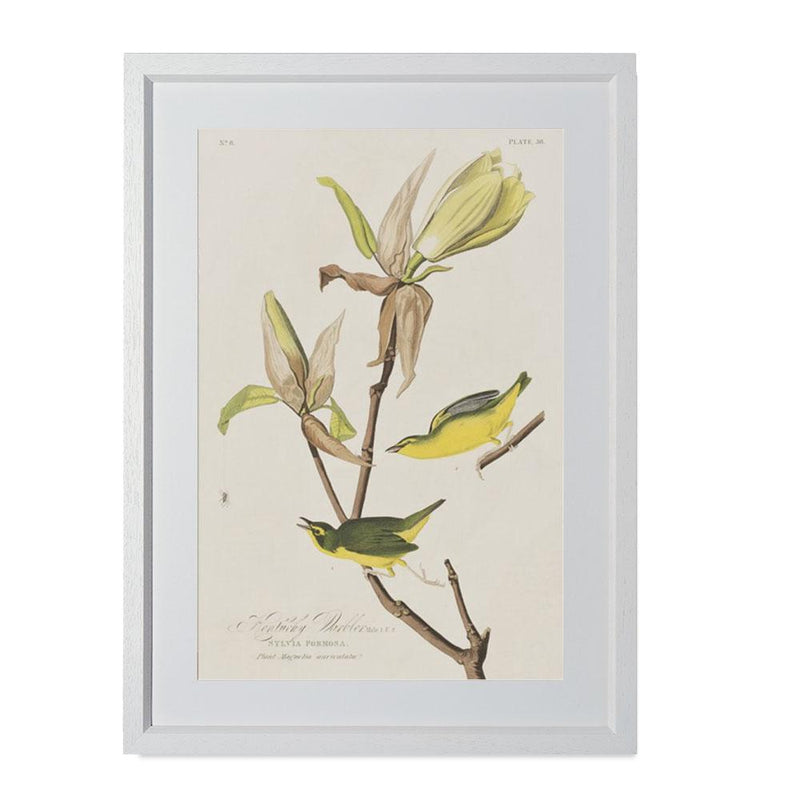 "Kentucky Warbler Smith & Co Galleries 14"" x 20"" Cream 5mm Luxe Floated - Strivezy"