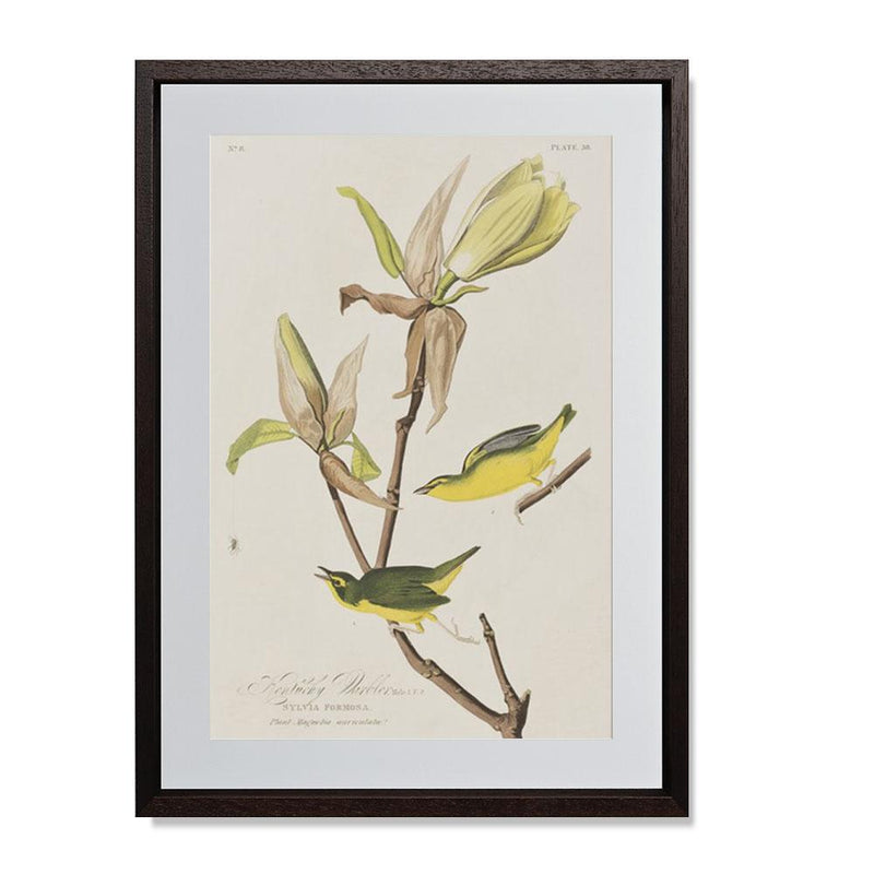 "Kentucky Warbler Smith & Co Galleries 14"" x 20"" Modern Wood 5mm Luxe Floated - Strivezy"