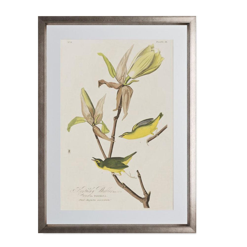 "Kentucky Warbler Smith & Co Galleries 14"" x 20"" Warm Silver 5mm Luxe Floated - Strivezy"