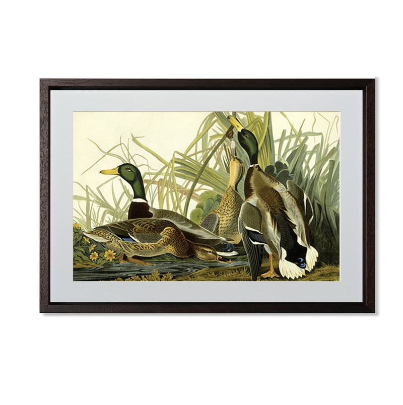 "Mallard Duck Smith & Co Galleries 20"" x 14"" Modern Wood 5mm Luxe Floated - Strivezy"