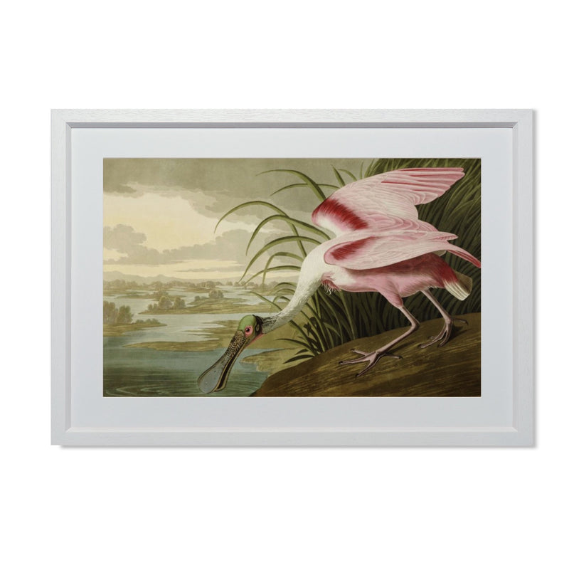"Roseate Spoonbill Smith & Co Galleries 20"" x 14"" Cream 5mm Luxe Floated - Strivezy"