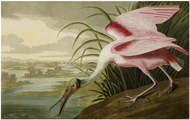 Roseate Spoonbill Smith & Co Galleries - Strivezy