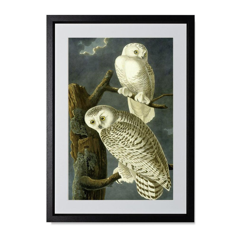 "Snowy Owl Smith & Co Galleries 14"" x 20"" Black 5mm Luxe Floated - Strivezy"