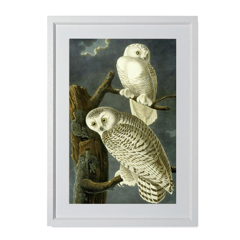 "Snowy Owl Smith & Co Galleries 14"" x 20"" Cream 5mm Luxe Floated - Strivezy"