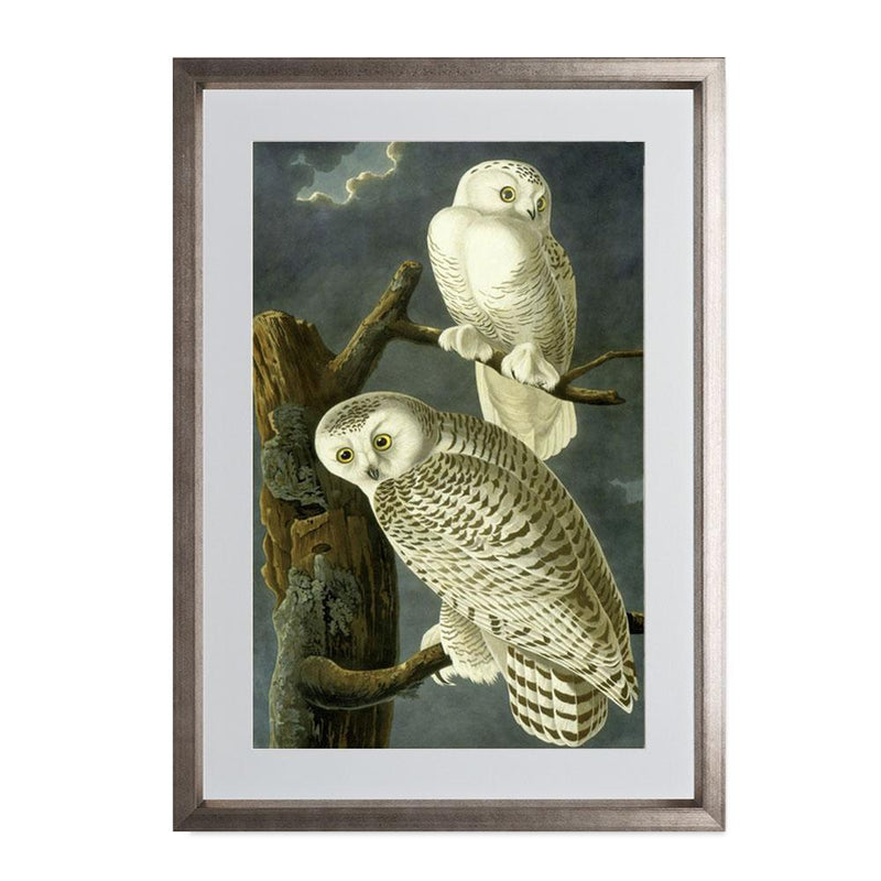"Snowy Owl Smith & Co Galleries 14"" x 20"" Warm Silver 5mm Luxe Floated - Strivezy"