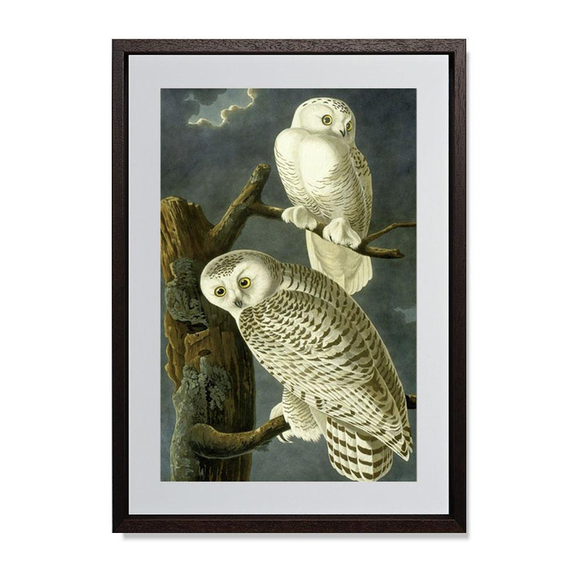 "Snowy Owl Smith & Co Galleries 19"" x 28"" Modern Wood 5mm Luxe Floated - Strivezy"