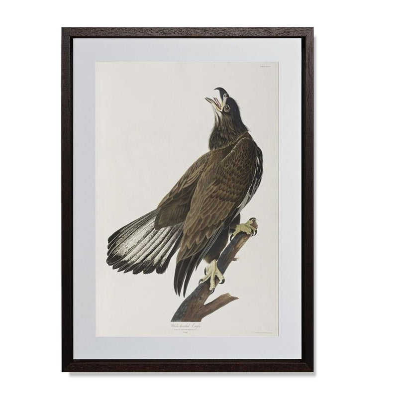 "White-headed Eagle Smith & Co Galleries 14"" x 20"" Modern Wood 5mm Luxe Floated - Strivezy"
