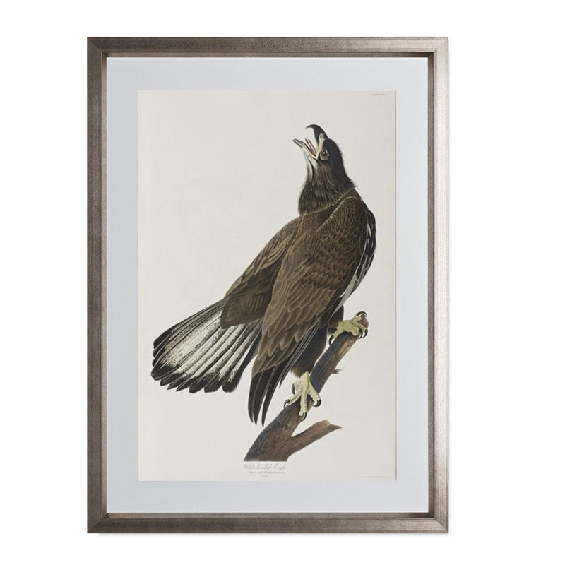 "White-headed Eagle Smith & Co Galleries 14"" x 20"" Warm Silver 5mm Luxe Floated - Strivezy"